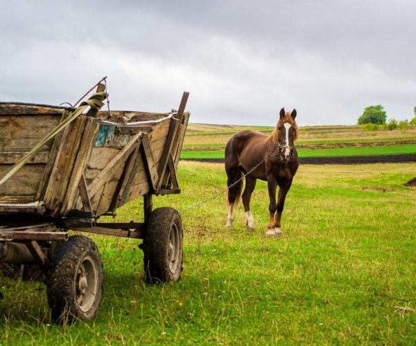 PFAS-–-Putting-the-Cart-Before-the-Horse-2